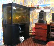 Цельностеклянный Аквариум 300 литров с тумбой и рыбками