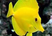 Аквариумные рыбки на любой вкус и цвет. Недорого!