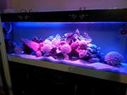 Aquafish аквариумы и аксессуары
