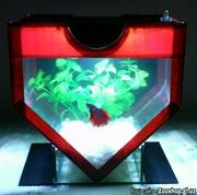 Мини-аквариум в форме сердца.